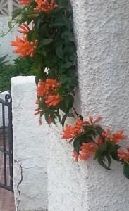 Orange  kompr